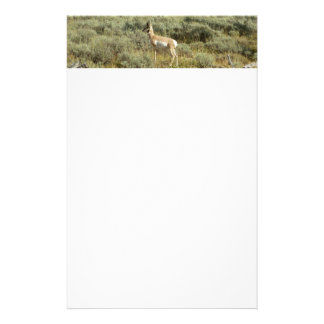 Pronghorn at Grand Teton National Park Stationery