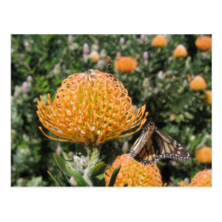 Protea Bee & Butterfly Postcard