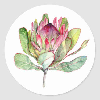 Protea Flower Classic Round Sticker
