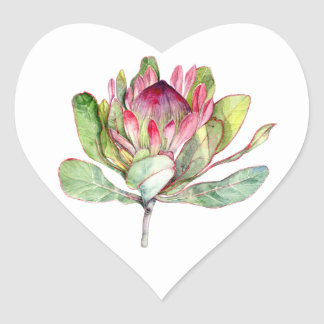 Protea Flower Heart Sticker
