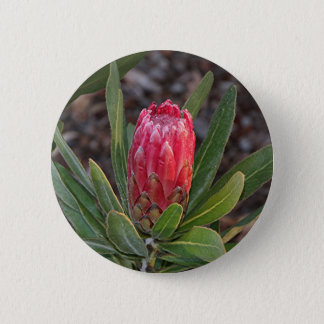 Protea flower with raindrops 6 cm round badge
