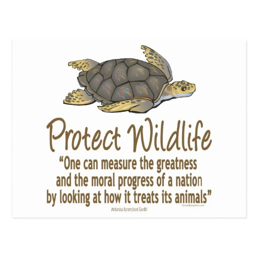 Protect Sea Turtles Post Cards