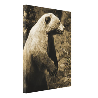Proud Bear Canvas Print
