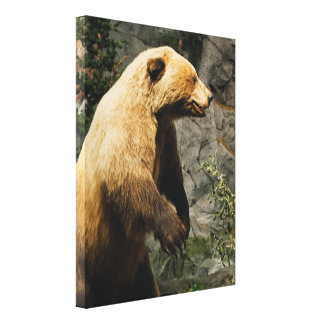 Proud Bear Stretched Canvas Prints