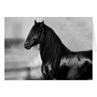 Proud Friesian black stallion horse Greeting Card