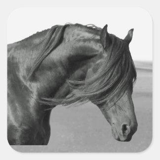 Proud Friesian black stallion horse Square Sticker
