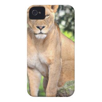 Proud Lioness iPhone 4 Case-Mate Cases