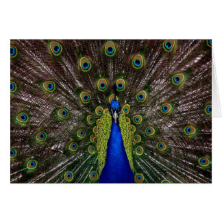 Proud Peacock Card