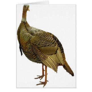 Proud Wild Turkey Greeting Card