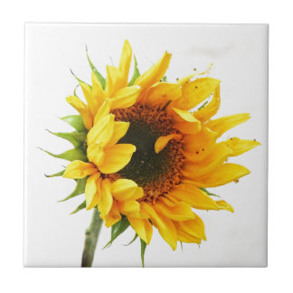 Provincetown Sunflower Tile