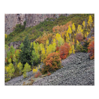 Provo River and aspen trees 10 Poster