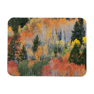 Provo River and aspen trees 11 Magnet