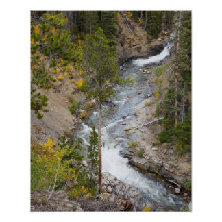 Provo River and aspen trees 14 Poster