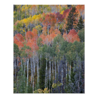 Provo River and aspen trees 16 Poster
