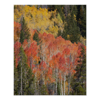 Provo River and aspen trees 6 Poster
