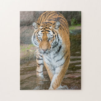Prowling Tiger Portrait Photograph Jigsaw Puzzle