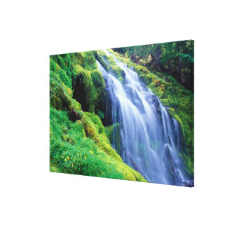 Proxy Falls in the central Oregon Cascades. Canvas Print