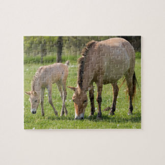 Przewalski's Horse and foal grazing Jigsaw Puzzle