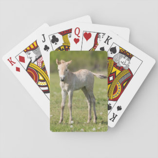 Przewalski's Horse foal, Hungary Playing Cards