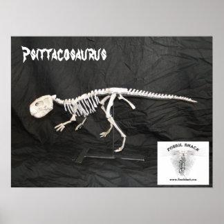 Psittacosaurus Skeleton Poster