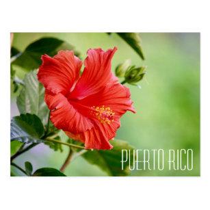 Hibiscus Flowers Postcards Zazzle Au