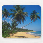Puerto Rico, Isla Verde, palm trees. Mouse Pads