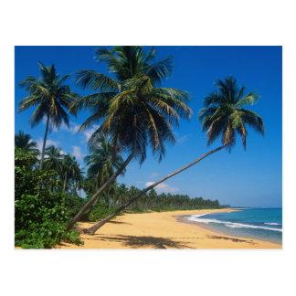Puerto Rico, Isla Verde, palm trees. Postcard