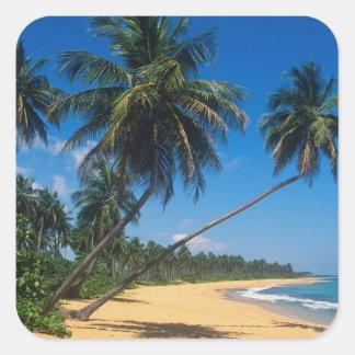 Puerto Rico, Isla Verde, palm trees. Square Sticker