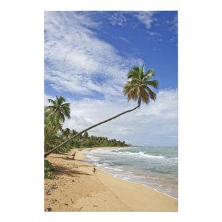 Puerto Rico. Tres Palmitas Beach Puerto Rico Photo Print