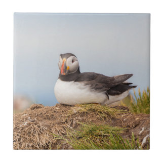 Puffin bird ceramic tile
