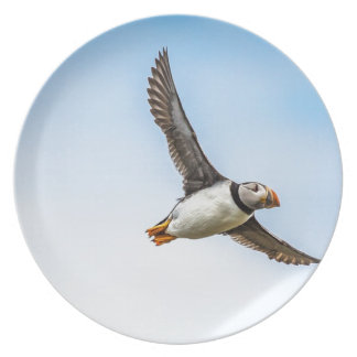 Puffin Bird Sea Flight Wildlife Fly Feather Plate