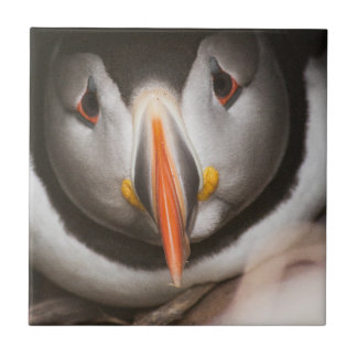 Puffin bird small square tile