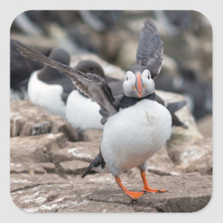 Puffin bird square sticker