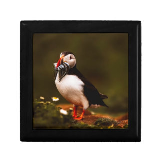 Puffin Fish Animal Bird Wildlife Atlantic Island Gift Box