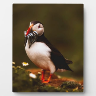 Puffin Fish Animal Bird Wildlife Atlantic Island Plaque