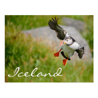 Puffin flying postcard