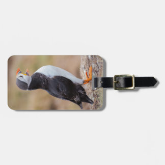 puffin photograph tag