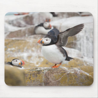 Puffin Ready To Take Off Mouse Pad