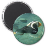 Puffin Refrigerator Magnets