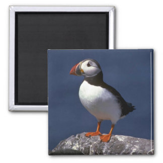 Puffin Square Magnet
