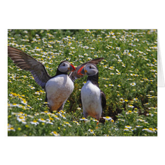 Puffins Notecard