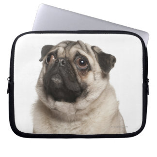 Pug (13 months old) looking up laptop computer sleeves