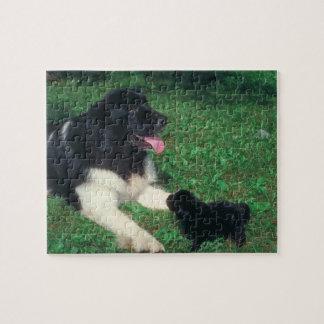 Pug and Newfoundland Dog Puzzle