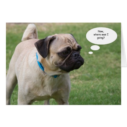 Happy Thursday Images With Dogs Pug Birthday Cards Fre...