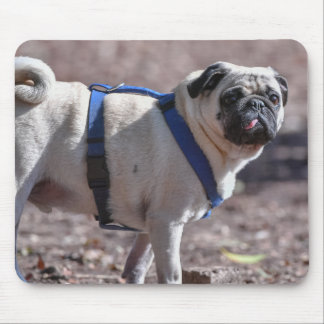 Pug Checking You Out Mouse Pad