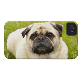 Pug cute dog beautiful photo, gift iPhone 4 covers