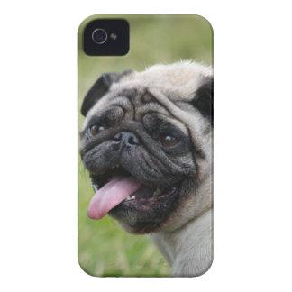 Pug dog blackberry bold case cute photo