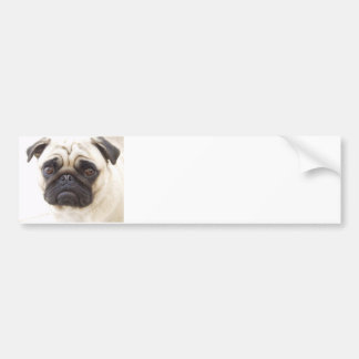 Pug Dog Bumper Sticker  Bumper Sticker