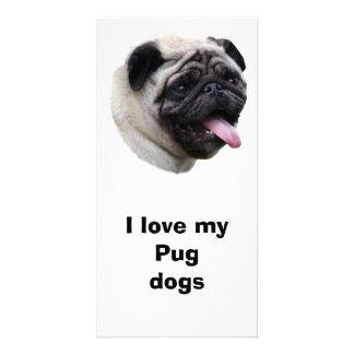 Pug dog pet photo portrait photo greeting card