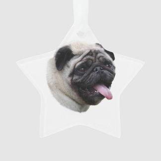 Pug dog photo portrait
